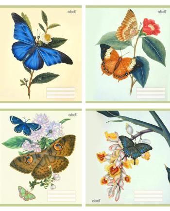 Тетрадь общая 36 л, Цветы и бабочки